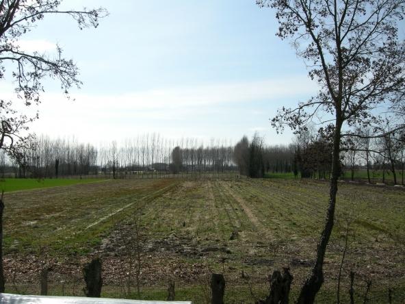 Rustico-singolo-terra-agricola-campagna