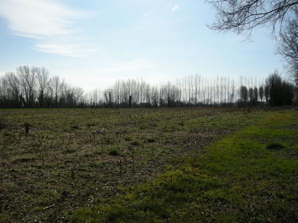 Rustico-singolo-terra-agricola-campagna (5)