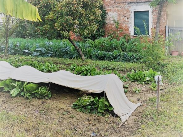 quinto-rustico-giardino-orto-terreno-legnaia(4)